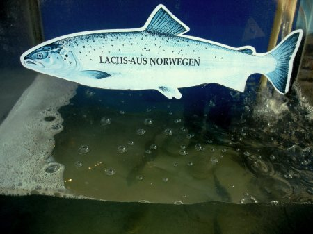 At the restaurant where we had breakfast we found Norwegian salmon swimming around in an aquarium.